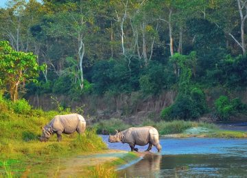 nepal wildlife safari chitwan